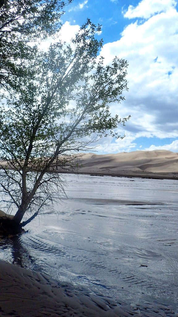 Image: Tree at Medano Creek at Great Sand Dunes National Park